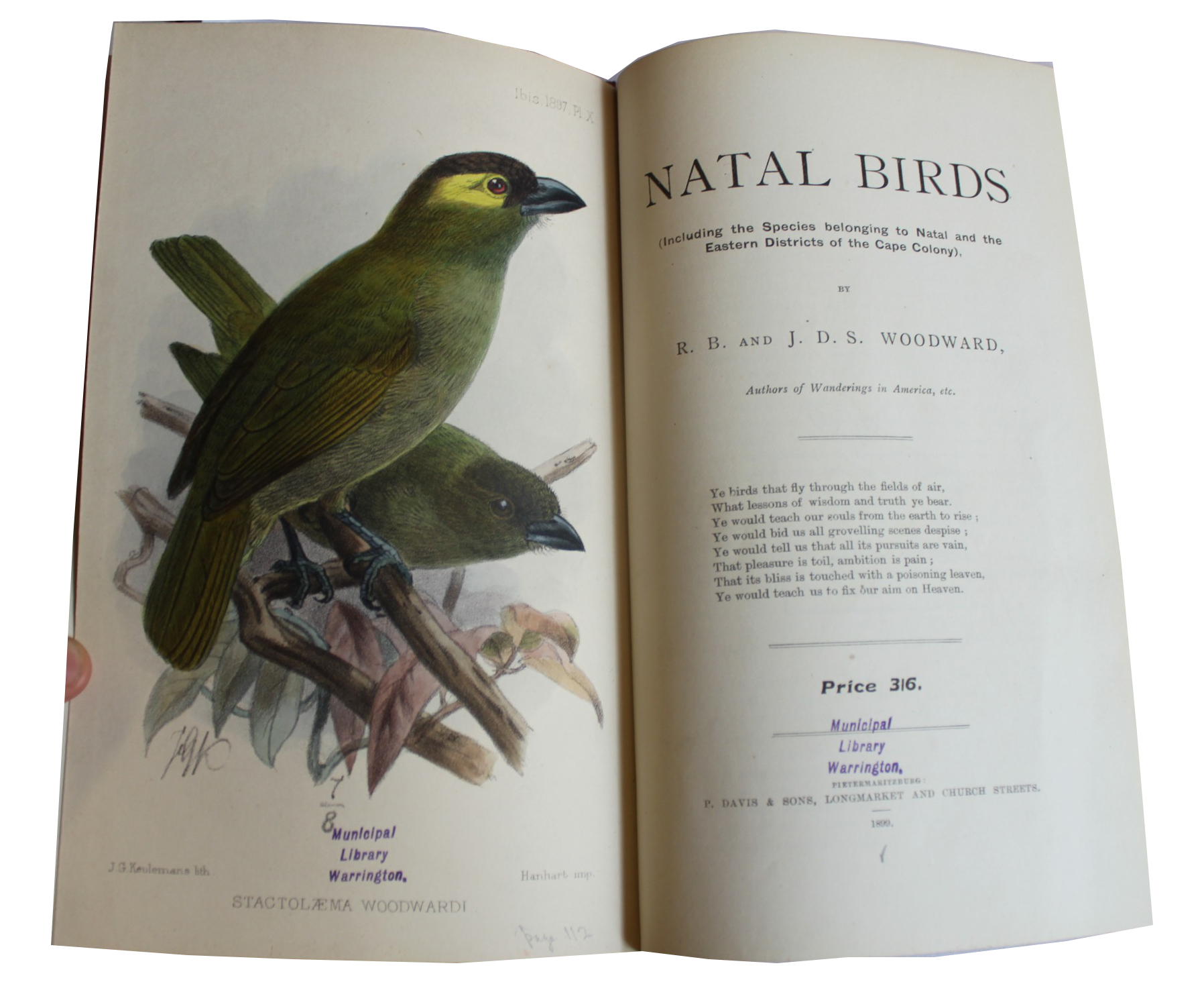Image for Natal Birds (Including the Species belonging to Natal and the Eatern Districts of the Cape Colony)