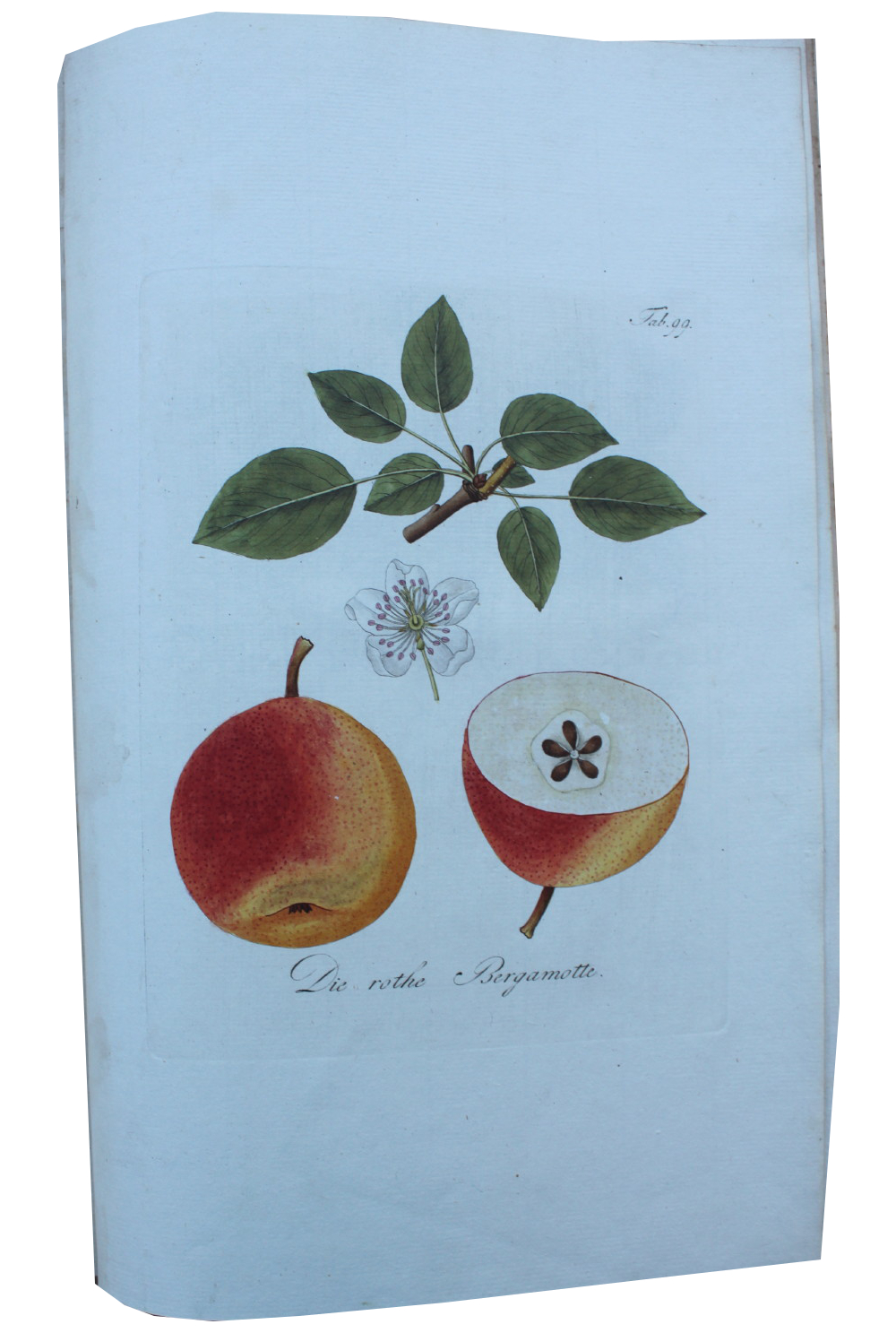 Image for Pomona Austriaca, ou Arbres Fruitiers d'Autriche, Représentés en Figures, Dessinées et Peintes d'Apres Nature. [Fruit Trees of Austria Represented by figures, drawn and painted from Nature.] Abhandlung von den Obstaumen worinn ihre Gestalt, Erziehung und Pflege angezeigt und beschreiben wird mit 100 sehr feinen Abbildungen in Kupfer gestochen und nach der Natur in Farben dargestellt. [Treatise on Fruit Trees wherein their form, growth and tending will be shown and described, with 100 very fine illustrations engraved in copper, and depicted in their natural colours.]