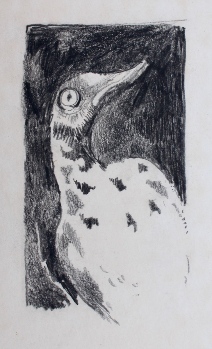 Image for Bird. Original drawing.