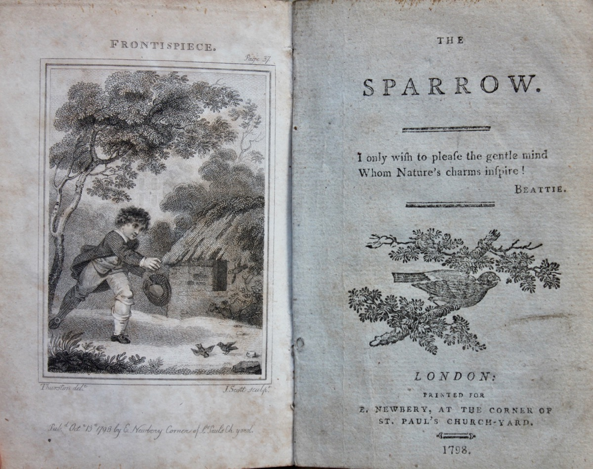 Image for The Sparrow.